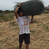 Undergraduate intern builds restoration fencing at UCSC Younger Lagoon Reserve