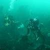 Divers on a transect in the kelp forest at UCSC Landels-Hill Big Creek Natural Reserve